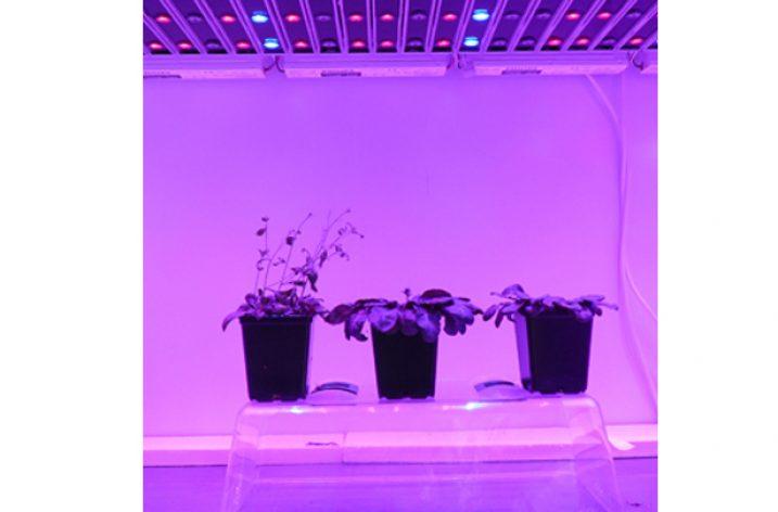 LED-y do hodowli roślin