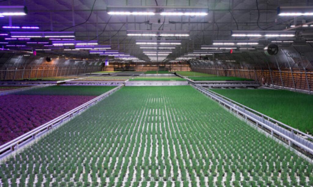 Technologia Silvair w oświetleniu do uprawy roślin